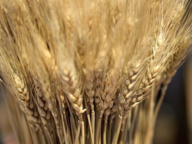 血圧を下げるには悪玉コレステロールの対策も大麦が効果的